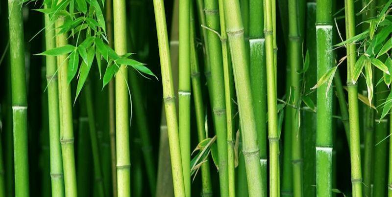 BambooStems